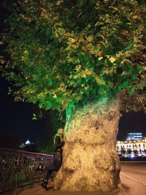 Многовековое грузинское дерево, Тбилиси 2018