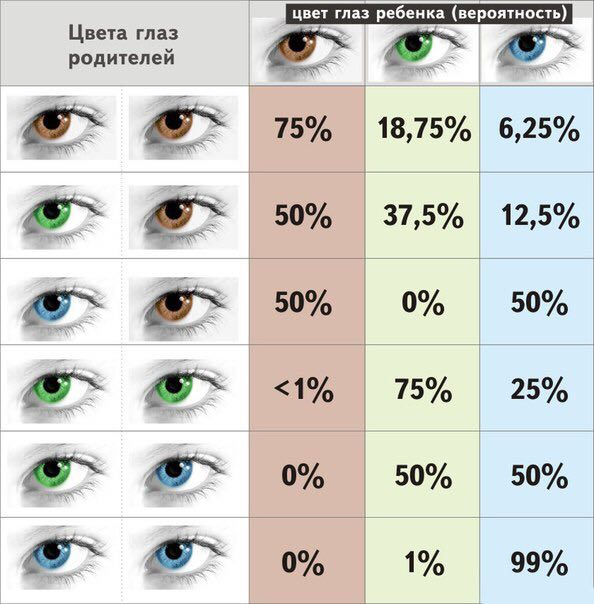 Цвет радужки глаза родителей и ребенка